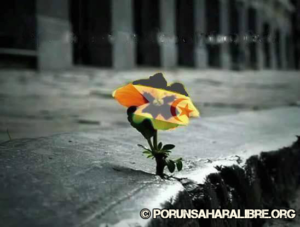 florsaharac